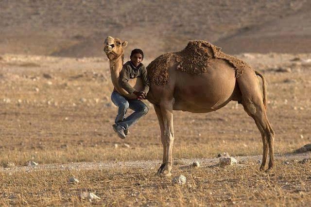 11303509 1161259940556175 769482545 n - Paul Bowles, Um chá no deserto do nosso descontentamento